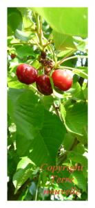 allergies alimentaires et traitement chimique sur les fruits et légumes