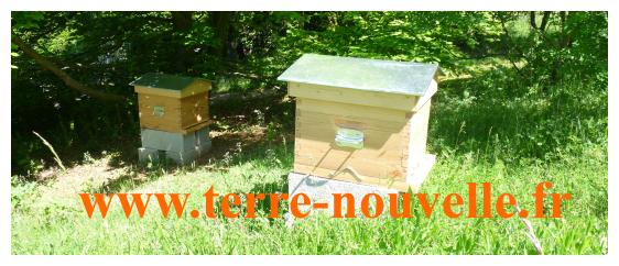 Nos abeilles sont arrivées : livraison de nos 2 essaims, premiers soins aux ruches, travaux et investissement à prévoir pour le rucher