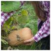 Butternut : comment je la cultive