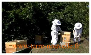 comment recolter son miel