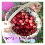 Fruits pour nos enfants
