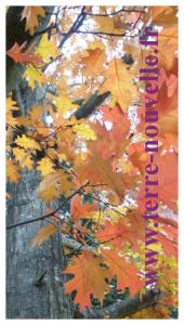 Recettes de confitures de fruits d'automne