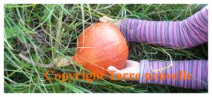 Survivalisme familial : avoir un potager prêt à produire de beaux fruits et légumes