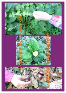 Survivalisme familial : 3 plantes sauvages comestibles
