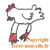 survivalisme poule et poulailler2 Survivalisme familial : bientôt un poulailler et des poules