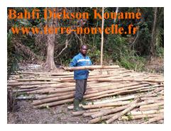 tiges de bambou découpées à la machette