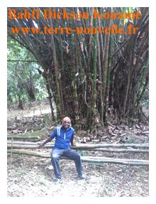 une touffe de bambou