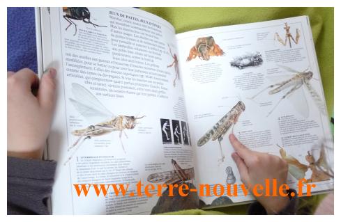 10 insectes comestibles : pour tester l'entomophagie