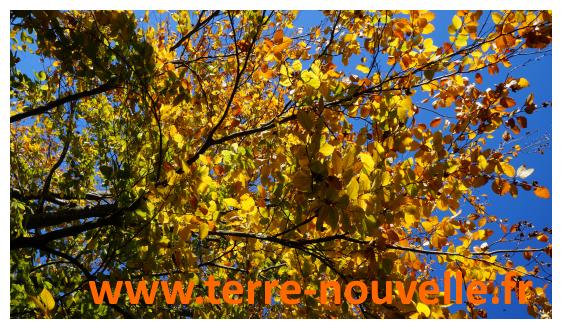 3 secrets pour combattre le blues de l'automne, la fatigue hivernale