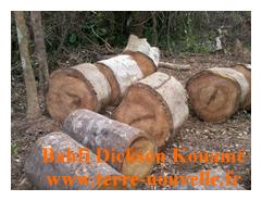 Abattage des arbres et découpe des arbres