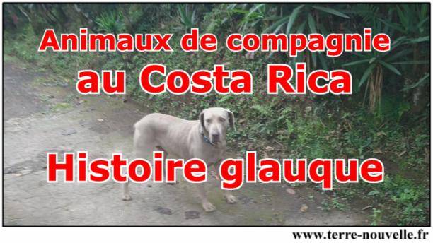 Les animaux de compagnie au Costa Rica - et une histoire glauque...