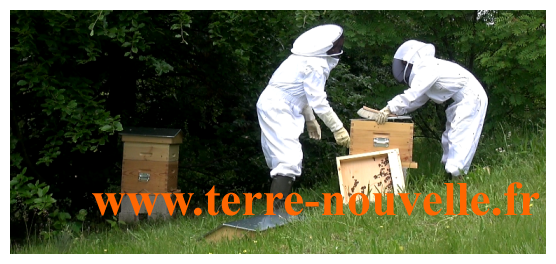 Apiculture : la pose des hausses, pour la récolte du miel
