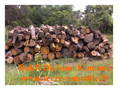 Assemblage des troncs sur site