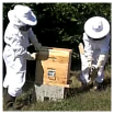comment recolter le miel