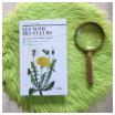 comment reconnaitre les plantes : clé de détermination botanique