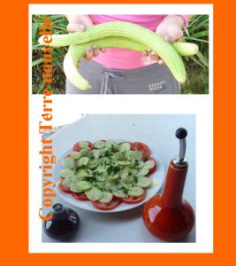 Concombre espagnol, salade de concombre, gaspacho de concombre