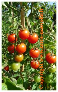 Graines et survivalisme : savoir sélectionner ses graines, les récolter, les conserver.
