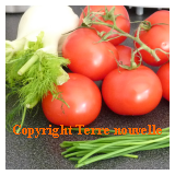 Potage froid tomate fenouil