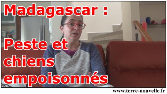 Madagascar : la peste revient, empoisonnements de chiens en série : le témoignage de notre correspondant à Madagascar
