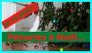 "<a href=""https://www.terre-nouvelle.fr/wp-content/uploads/penuries-a-noel.png""><img src=""https://www.terre-nouvelle.fr/wp-content/uploads/penuries-a-noel-300x169.png"" alt=""Pénuries à Noël... ça va péter !"" width=""300"" height=""169"" class=""size-medium wp-image-19726"" /></a> Pénuries à Noël... ça va péter !"