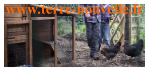 Retour d'expérience : nos poules pondeuses 1 an après leur arrivée