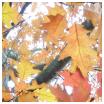 recettes confitures d automne Confitures dautomne : recettes
