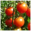 savoir faire ses graines survivalisme Graines et survivalisme : sélectionner ses graines, la vérité sur les variétés F1