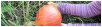 survivalisme avoir un potager qui produit Survivalisme familial : comment avoir un potager prêt à produire de beaux fruits et légumes