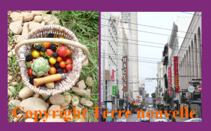 Survivalisme : vivre en campagne ou en ville?
