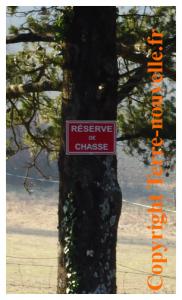 Survivaliste : chasseur ou pas chasseur